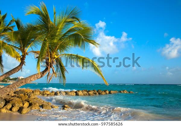 palms-bent-on-shore-ocean-600w-597585626