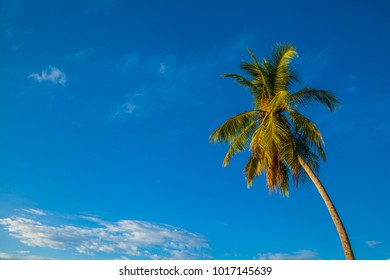 Palms in the blue sky.