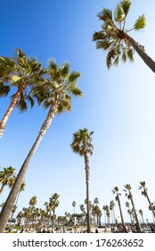 Palms and blue sky at Venice Beach in Los Angeles, California