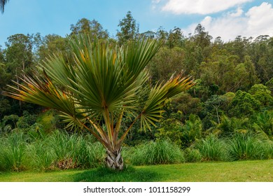 Palms grow like grasses, with sheathes that wrap around the stems or trunks then give rise to a leaf - captured in Inhotim, Brumadinho, Brazil