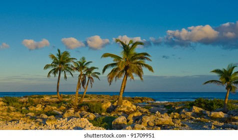 Palms at he ocean. Sunset at the caribbean rocky beach.