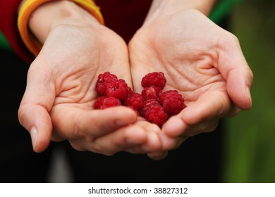 palms holding wild raspberries on natural green background