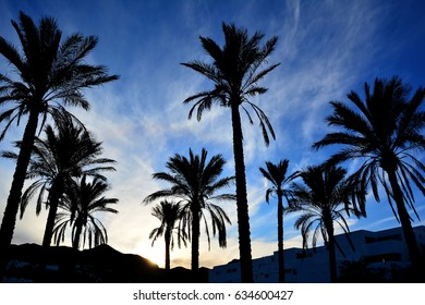 Palms isolated on the sunset