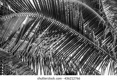Palms leaf on black and white background