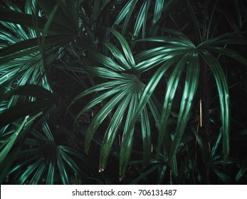Palms leaves background