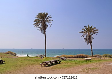 Palms and the Mediterranean Sea in Ashkelon National Park, Israel