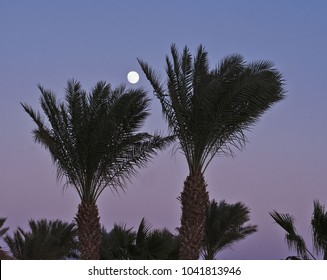 palms and moon
