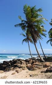 palms near sea sri lanka