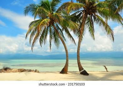 Palms on the beach in the Caribbean sea