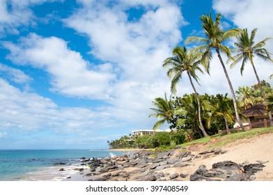 Palms on the beach, maui, Hawaii