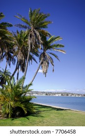 Palms on the beach of Mission Bay, San Diego, California (portrait orientation).