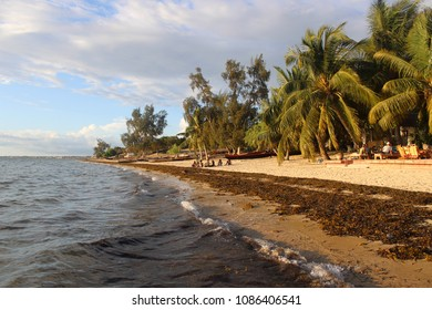 Palms on the beach of Mozambique Channel on a spring evening at Ifaty, Madagascar