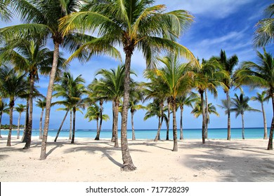 Palms on the blue sea and sky background, shallow focus