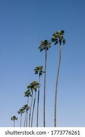 Palms on the blue sky background in Los Angeles. Vintage picture with freedom and relaxation concept