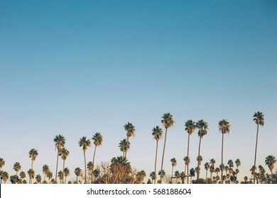 Palms on the blue sky background in California. Vintage picture with freedom and relaxation concept.