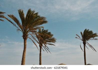 palms on blue sky background
