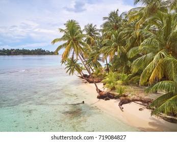 Palms on caribbean beach in Nicaragua. Pearl beach island