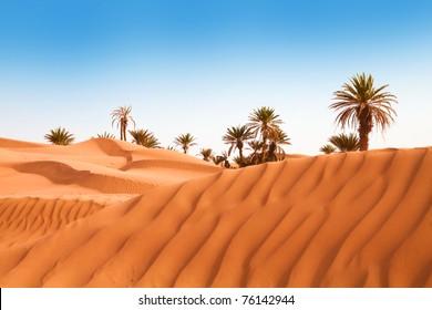 Palms on the desert