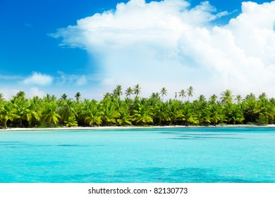 palms on island and caribbean sea