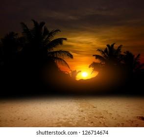 palms on the ocean beach