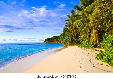 Palms on tropical beach - nature background