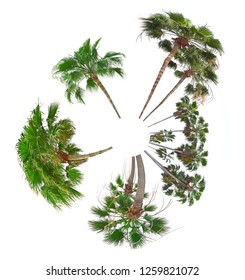 palms on white background collection