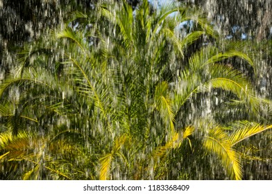 palms and rain in tropical  hurricane cyclone storm
