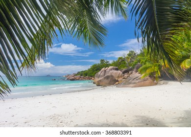 Palms, Rocks and dream beach - Seychelles