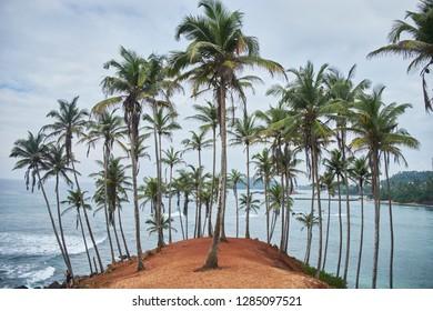 Palms. secret beach. Mirissa, Sri Lanka.