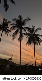 Palms silhouettes on night sky in Thailand, sunset in tropics