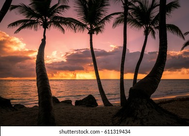Palms silhouettes on a tropical beach at sunset, Dominican republic, bahamas, cuba, barbados, thailand.mexico