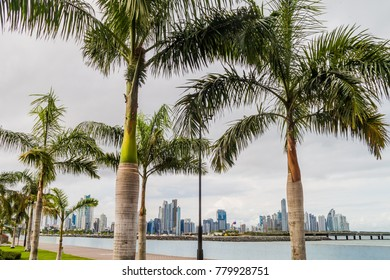 Palms and skyscrapers of Panama City
