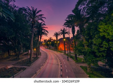 The palms street at sunset in Kos island Greece