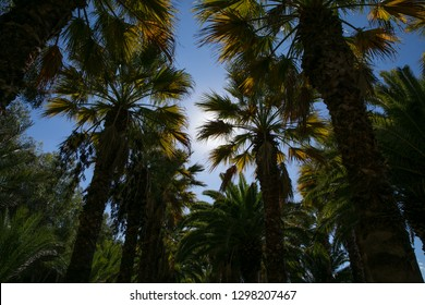 palms in summer