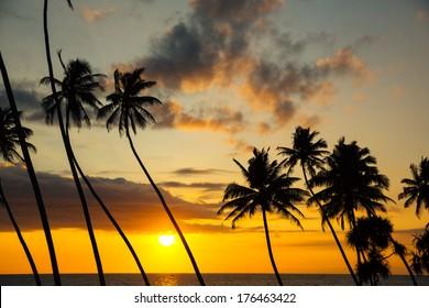 Palms and sun, tropical sunset taken in Unawatuna , Sri Lanka