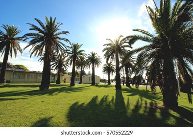 Palms at sunny day, Dromana, Victoria, Australia