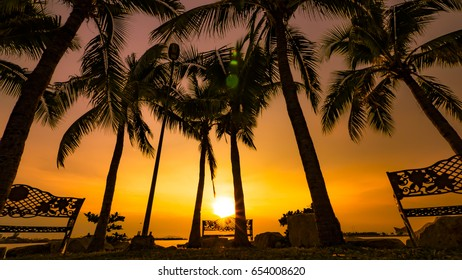 palms at the sunset