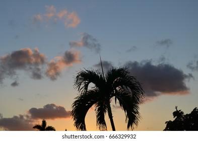 Palms and sunset