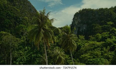Palms in Thailand Koh Phi Phi