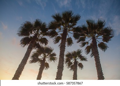 Palms tree on beach and sunset in California