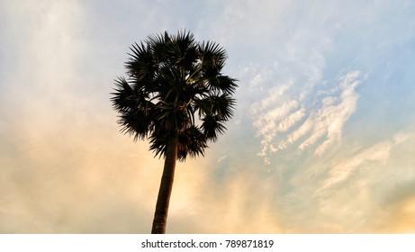 palms tree on sunset background