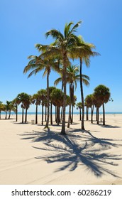 Palms Trees in Miami's Crandon Park Beach in Key Biscayne