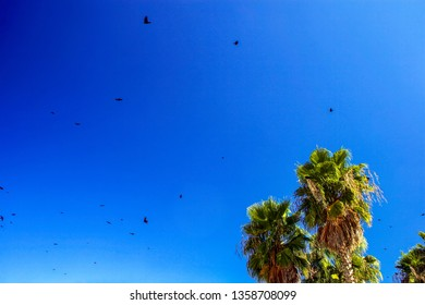 Palms trees and seagulls flying through the bright blue sky