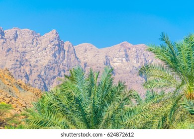 Palms in the wadi tiwi with a steep cliff at background in Oman.