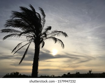 Palmtree against a beautiful cloudy sky at sunset