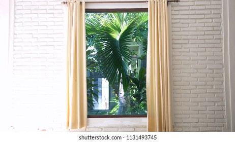 Palm-tree behind the curtains. Cosy apartament interior with beatuful view on green leaves coconut palm trees. Concept of tropical vacation, summer holiday and leisure