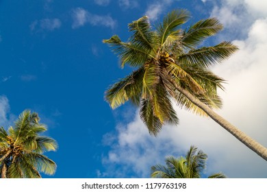 Palmtree in the caribbean