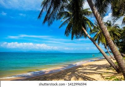 Palmtree at Mae Nam Beachm Koh Samui, Thailand