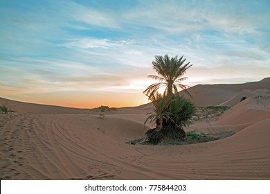 Palmtree in the middle of the Sahara desert in Morocco at sunrise