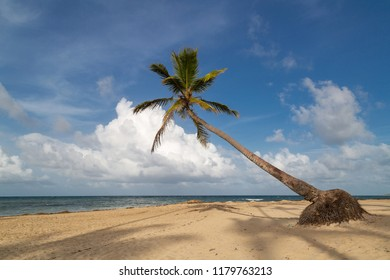 Palmtree on a beautiful beach in the caribbean with the ocean and some clouds
